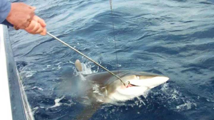removing the hook in a shark with a acr dehooker