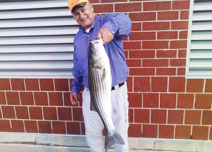 striped bass caught from pier with an live eel bait