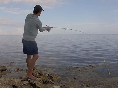 Casting a Lure to Catch Tarpon