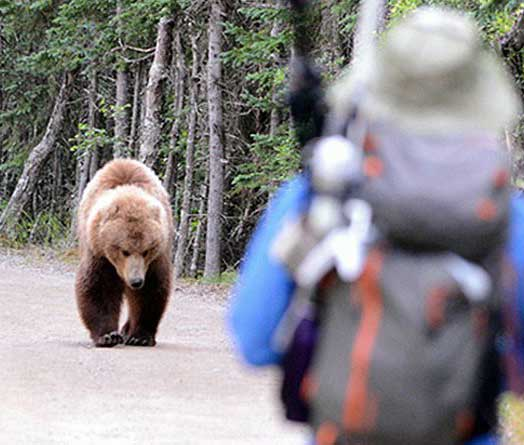 Hiker About to Use Bear Spray