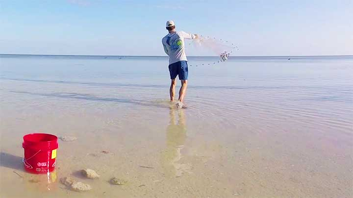 how to catch tarpon bait mullet and live bait