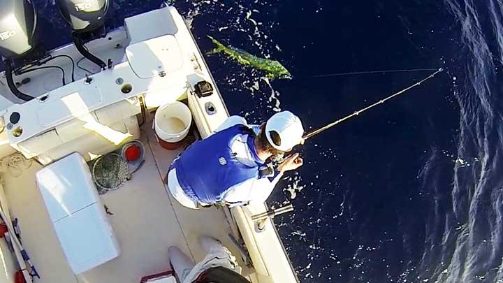 captain cody fishing for mahi mahi