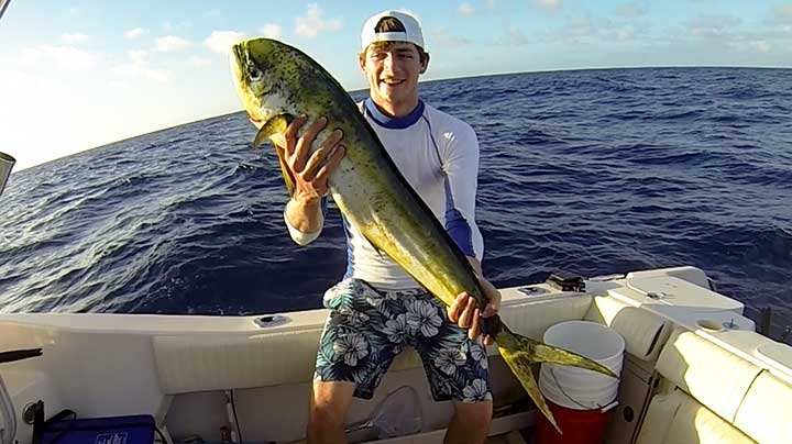 cody catches a cow dolphin on the best mahi mahi lure
