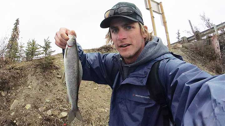 large grayling trout caught near denali highway