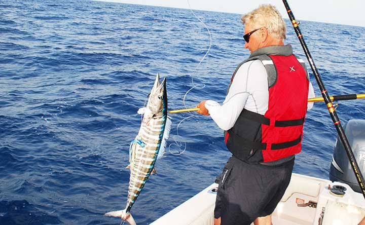 wahoo caught with a blue and white lure while trolling