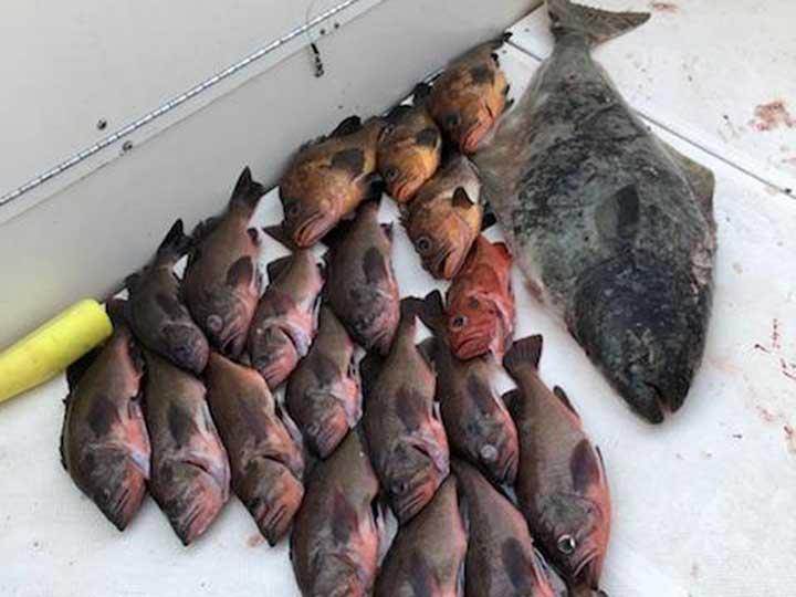 dusky rockfish and quillback rockfish