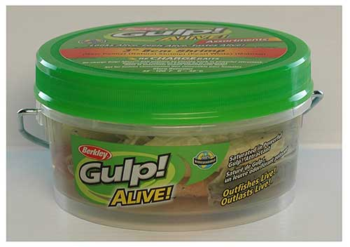 gulp shrimp triple tail fish bait
