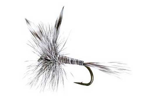 mosquito-trout-fly