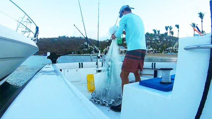 putting bait from cast net in livewell