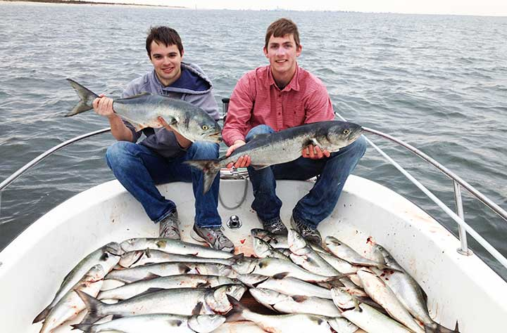 big bluefish caught with lures and bait in new jersey