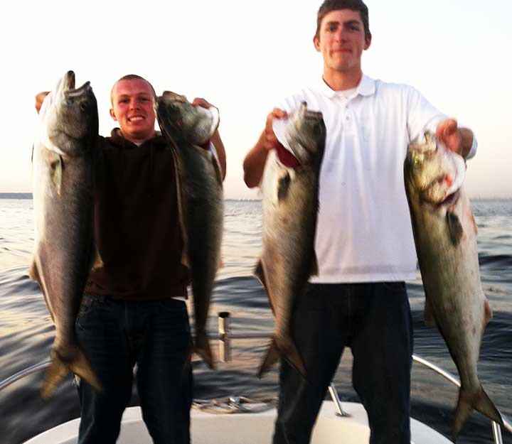 bluefish caught using lures and bunker the best bluefish bait