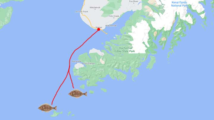homer alaska fishing map