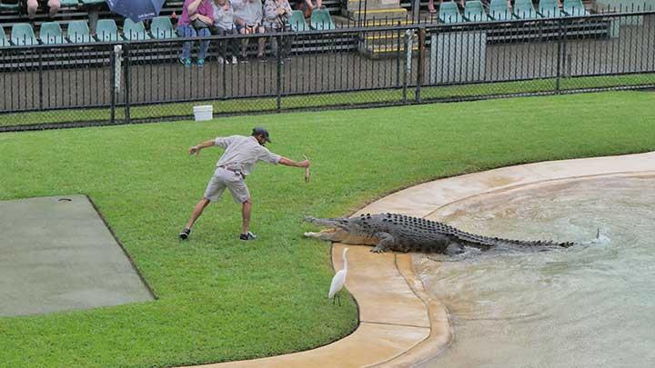 do not feed crocodiles or aligators