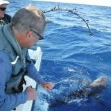 Best Shark Fishing Rigs