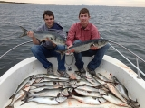 Best Bluefish Lures